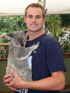 Andy Roddick takes time out from the Brisbane International 2010 to hold a aoala at the Lone Pine Koala Sanctuary on January 5, 2010 in Brisbane, Australia