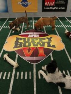 Animal Planet's 'Puppy Bowl VI'
