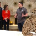 Access Hollywood Live: Real Life Dr. Doolittle Brings Wildlife To The Access Stage
