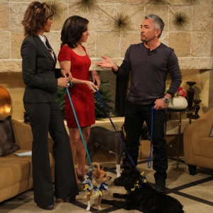 Access Hollywood Live: Save Your Home From Canine Catastrophes With Cesar Milan's Help!