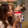 Ashley Madekwe Urges You To Adopt A Pet For The Holidays