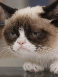 Grumpy Cat appears on 'Good Morning America,' on March 22, 2103