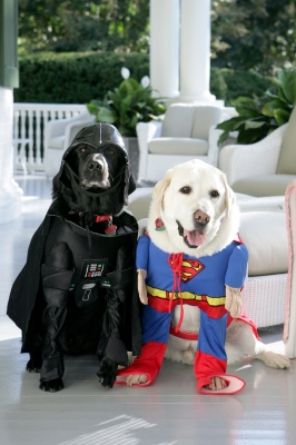 Vice President Dick Cheney's Labrador retrievers Jackson (L) and Dave sit for photos at the Vice President's Residence at the Naval Observatory dressed for Halloween October 31, 2007